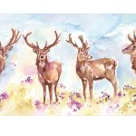 Stag Herd