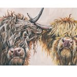 nosey cows 30 x 60